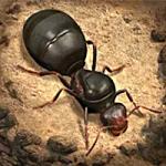 The-Ants-Underground-Kingdom